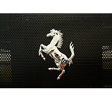 Prancing Horse Photographic Print