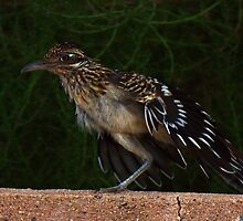 Roadrunner 2 by Marvin Collins