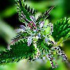 Natural Beauty by Wrayzo