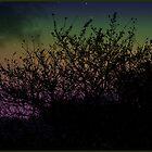 Rainbow by Lauren Finn