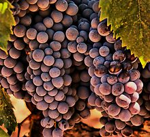 From the Vinyard by Barbara  Brown