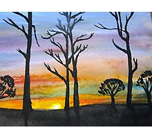 Sunset Silhouettes in the Woods Photographic Print