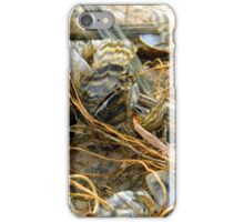 Zebra Mussels iPhone Case/Skin
