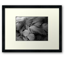 ©NS On My Wings In Mono Framed Print