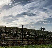 Vines in Healesville by Jenni Tanner