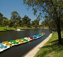 River Torrens, Adelaide by SusanAdey
