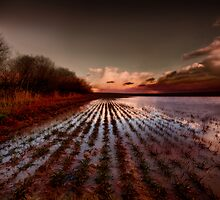 Paddy field by Stevacek