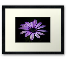 Purple Delight Framed Print
