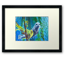 Seal in a Kelp Forest Framed Print