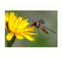 Small Wasp Art Print