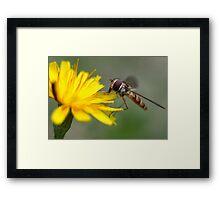Small Wasp Framed Print