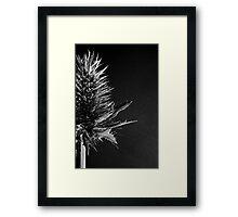 Sea Holly #2 Framed Print