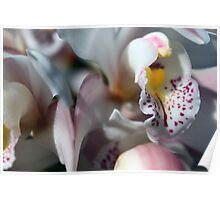 Orchid Abstract Poster