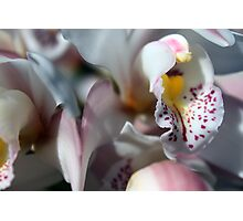 Orchid Abstract Photographic Print