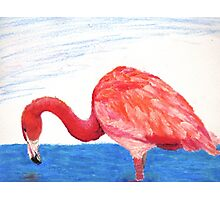 Fishing Pink Flamingo Photographic Print