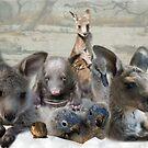 Orphaned Wildlife by Samantha Cole-Surjan