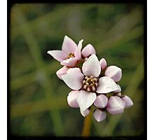 Small Pleasures Photographic Print