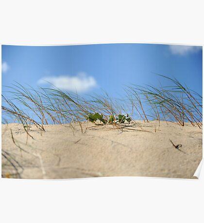Sand Dune Poster
