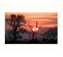Sabi Sands Sunset Art Print