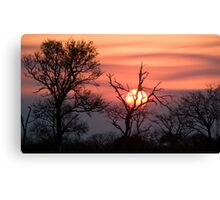 Sabi Sands Sunset Canvas Print