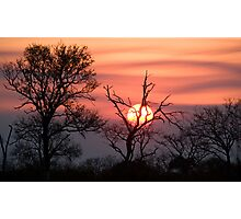 Sabi Sands Sunset Photographic Print
