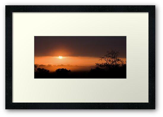 Thornybush Sunset by Michael  Moss