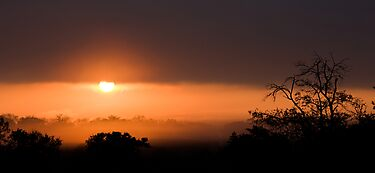 Thornybush Sunset by Michael  Moss