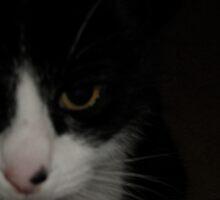 My friend Gemma - Very close up by judygal