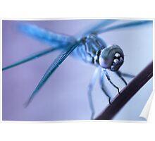 Alien Dragonfly Poster