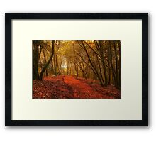The Lane in the Woods Framed Print