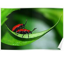 Mating Beetles Poster