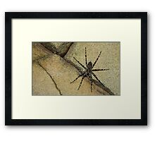 Wolf On The Wall Framed Print
