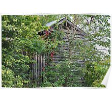 Old Barn Behind Trees Poster