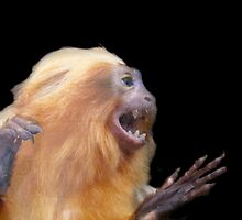 Goldon lion tamarin by kaotic-shell