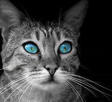 Old Blue Eyes by Mabel Forsyth