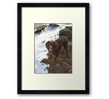 Special American Water Spaniel