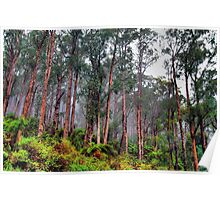We Will Return - Yarra Ranges National Park - The HDR Experience Poster