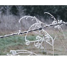 iced wire Photographic Print