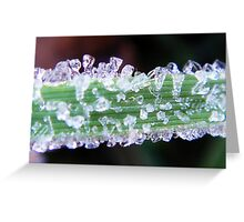 Beautiful frost on a green grass Greeting Card