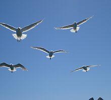Seaguls at Flight by Dorthy Ottaway