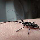 Mystery bug by vigor