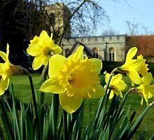 Church and daffodils by Ali-in-Cambs