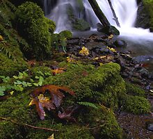 Whitehead Creek #1 by Allan  Erickson
