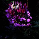 Night Flower (1) by sadeyedartist