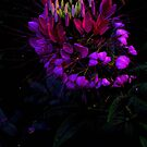Night Flower (2) by sadeyedartist