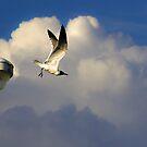 Catch the Breeze by gregvm