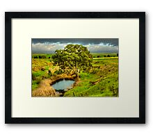 Gum Tree on the Bremer River Framed Print
