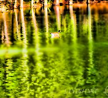 Lonely Duck on Emerald Lake by Julie Everhart