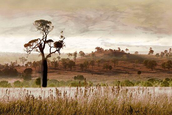 Gondwana Boab by Holly Kempe
