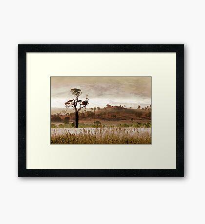 Gondwana Boab Framed Print